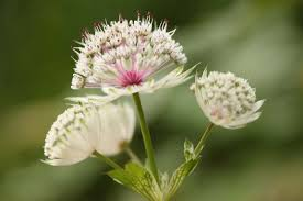 Naturopathie, phytothérapie, aromathérapie