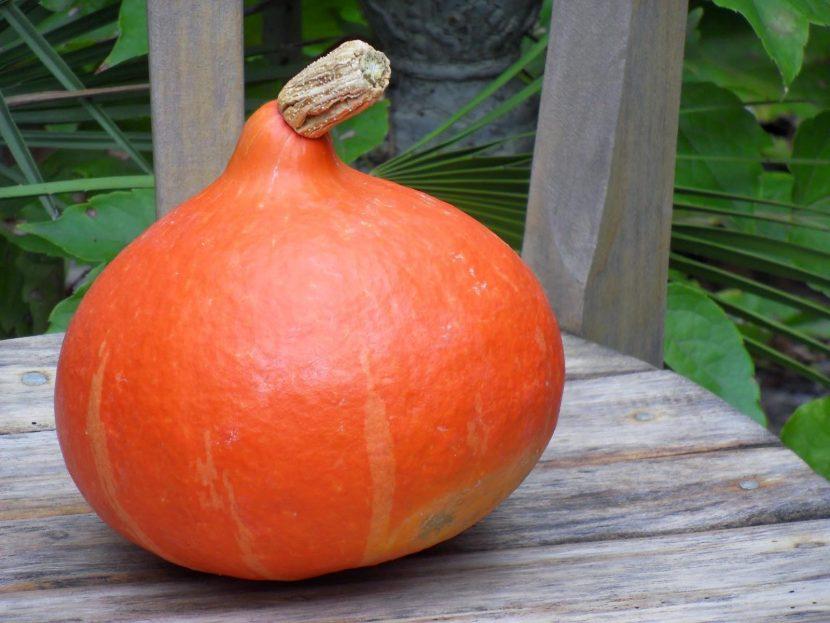Potimarron, légume star de l'automne